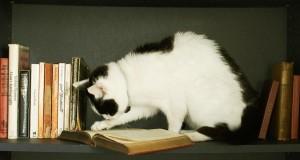 Autores recomendados
