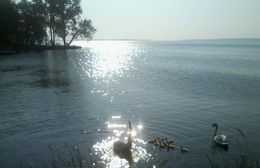 luz de cisne, luz nuestra