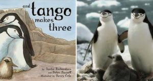 nd_Tango_Makes_Three_with_Chinstrap_Penguins