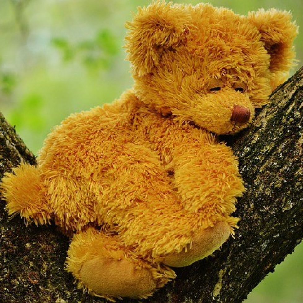 teddy bear 792191_640